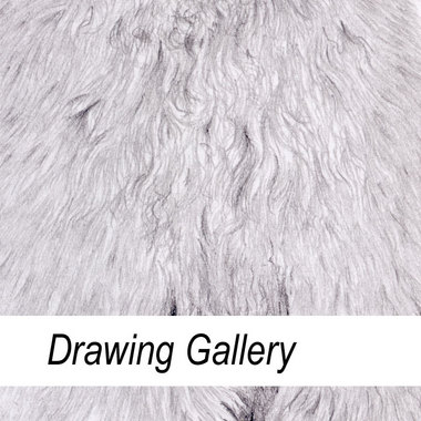 Drawing Gallery