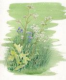 'Wild Flowers' Study