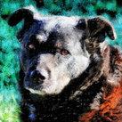 'Enzo' the Mastif
